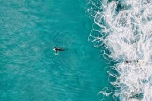 Surfing Ocean