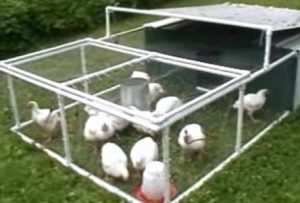 Cornish Cross Filled Chicken Tractor