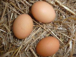 Eggs In Nest Box