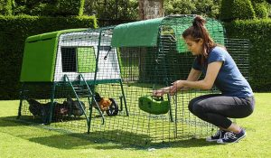 Eglu Backyard Chicken Coop