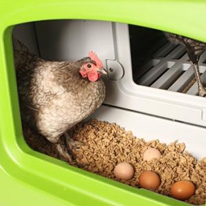 Eglu Cube Chicken Nest Box