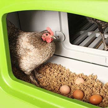Eglu Cube Chicken Nest Box
