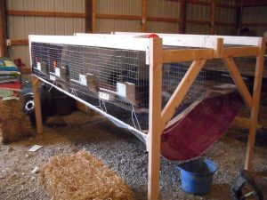 Meat Rabbit Cage Design