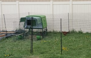 Chicken Coop & Fence