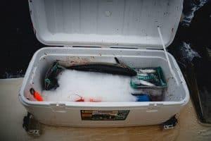 Natural Fish Refrigeration