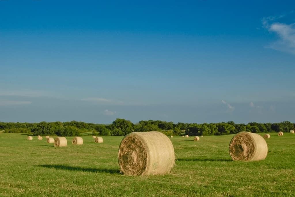 Texas Hay Field