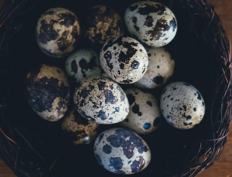 How To Hatch Quail Eggs