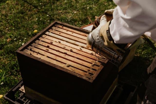Using A Bee smoker